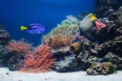 Het onderwater leven, Vissen, koraalrif Stock Afbeeldingen