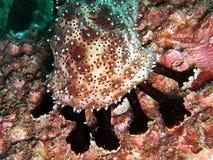 Het onderwater mariene leven Stock Foto