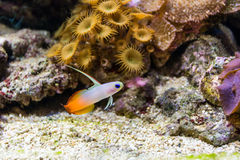 Het onderwaterleven Stock Afbeeldingen