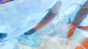 Het onderwaterleven in Doubai Royalty-vrije Stock Foto's