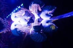 Het onderwaterleven in Doubai Royalty-vrije Stock Fotografie