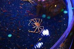 Het onderwaterleven in Doubai Royalty-vrije Stock Foto