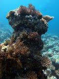 Het onderwaterleven: koralen in tropische wateren royalty-vrije stock foto