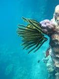 Het onderwaterleven met Zeeanemoon en vissen stock afbeeldingen