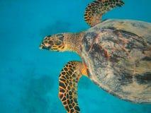 Het onderwaterleven van tropische overzees Stock Fotografie