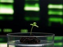 Het onderzoek van Biotechnologie stock afbeelding