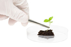 Het onderzoek van de biotechnologie stock foto
