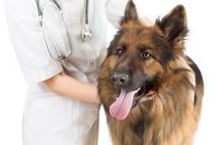 Het onderzoek van de herdershond door veterinaire arts royalty-vrije stock fotografie