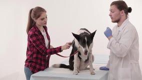 Het onderzoeken in dierenartskliniek stock videobeelden