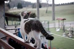 Het onderzoeken van kat Stock Foto