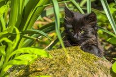 Het onderzoeken van katje Stock Afbeeldingen