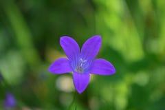 Het onduidelijke beeld in de lente kleurt bloemen en tuin royalty-vrije stock foto's