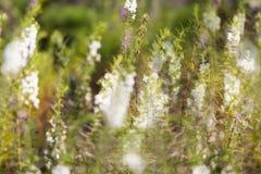 Het onduidelijke beeld van grasbergen Stock Afbeeldingen