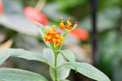 Het onduidelijke beeldachtergrond van de vlinderinstallatie in de dag bij de lente wordt genomen die Stock Foto's