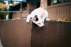 Het onhandige kat spelen dichtbij de trein Stock Afbeeldingen