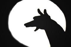 Het ontschorsen van de hond bij de maan Stock Foto