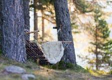 Het ontspannen in de bergmeren met de geluiden en de aroma's van de aard royalty-vrije stock fotografie