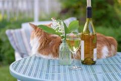 Het ontspannen in de binnenplaats op een warme avond met een glas van wit royalty-vrije stock afbeelding