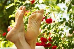 Het ontspannen in de tuin Royalty-vrije Stock Afbeeldingen