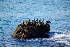 Het ontspannen de vogels schommelen blauw zeewater royalty-vrije stock foto's