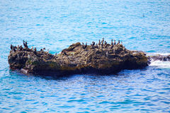 Het ontspannen de vogels schommelen blauw zeewater stock afbeeldingen