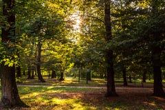 Het ontspannen en zonsondergang in het park Stock Afbeeldingen