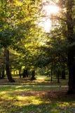 Het ontspannen en zonsondergang in het park Royalty-vrije Stock Afbeeldingen