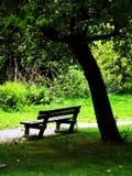 Het ontspannen in het park Stock Foto's