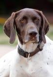 Het ontspannen Hond Stock Foto