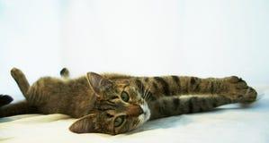 Het ontspannen kat royalty-vrije stock foto's