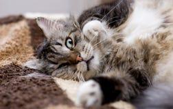 Het ontspannen kat Royalty-vrije Stock Afbeelding