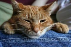 Het ontspannen kat Royalty-vrije Stock Afbeeldingen