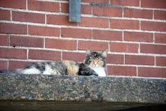 Het ontspannen kat Stock Afbeelding