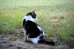 Het ontspannen kat Stock Foto's