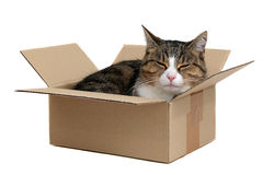 Het ontspannen leuke kat in doos Stock Foto's