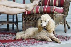 Het ontspannen op een Hond Dag Afternooon Royalty-vrije Stock Foto