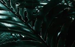 Het ontspannen op groen tropisch blad Weelderige tropische vegetatie van de Eilanden Hawa?, de V.S. stock foto