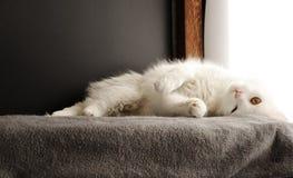 Het ontspannen van de kat Stock Afbeelding