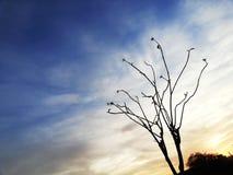 Het ontspannen wolken, blauwe hemel en boom royalty-vrije stock foto