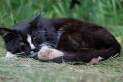 Het ontspannen zwarte kat zonder een eigenaar Stock Afbeeldingen