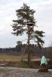 Het Ontspruiten brengt voor Jagers onder Stock Fotografie