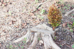 Het ontspruiten het nieuwe leven op een gehakte boomboomstam Stock Afbeelding