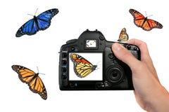 Het Ontspruiten van de fotograaf Vlinders in de Lucht Royalty-vrije Stock Afbeelding