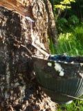 Het onttrekken van rubber. Stock Fotografie