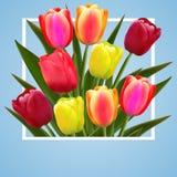 Het ontwerp van de achtergrond tulpenbloem bloemenkaartart. royalty-vrije illustratie