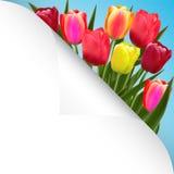 Het ontwerp van de achtergrond tulpenbloem bloemenkaartart. vector illustratie