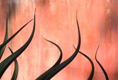 Het Ontwerp van de agave Stock Afbeelding