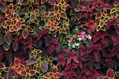 Het Ontwerp van de close-up van Bloemen Stock Foto's