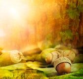 Het ontwerp van de herfst Royalty-vrije Stock Foto