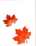 Het Ontwerp van de herfst vector illustratie